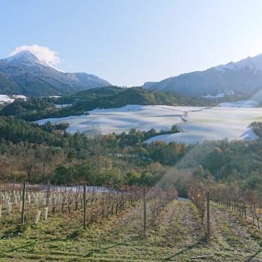 Weinbau am Alpenrand im südlichen Département Isère
